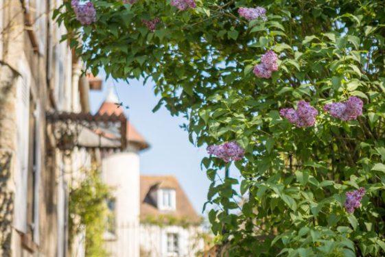 Val_doise_tourisme_LesSalonsFleuris